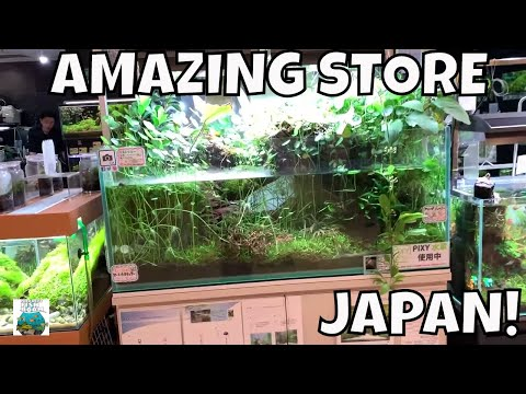 Local Fish Store Tour From JAPAN!