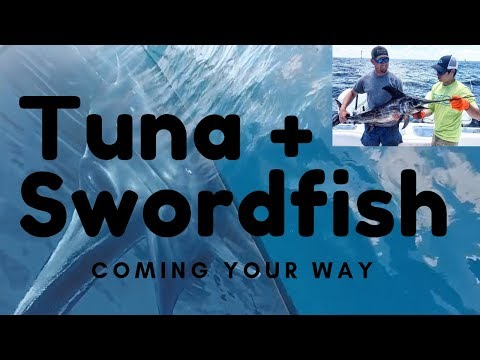 Tuna Trip With Mexican Gulf Fishing Company Saltwater Fishing In Venice,Louisiana