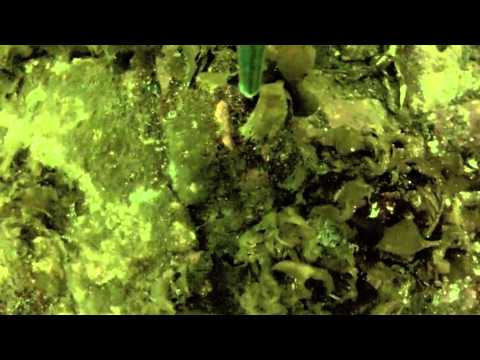 UNSW in Antarctica - Underwater Footage