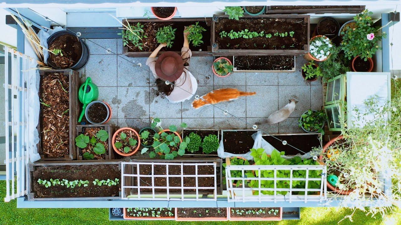 How My Balcony Vegetable Garden Transformed in 6 Weeks 🥰