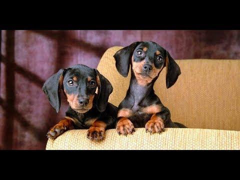 Cani affettuosi i nostri amici a quattro zampe for Cani giocherelloni