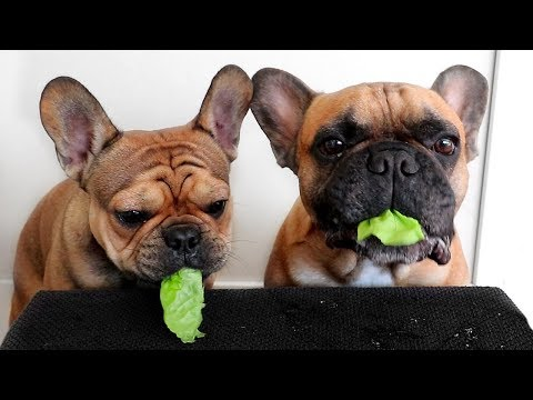 Puppy Snack Test with Rascal & Menace