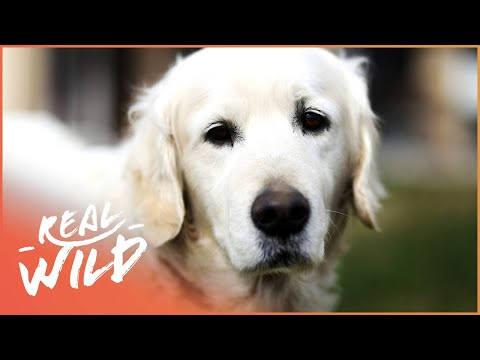 Doggy Sign Language And Saying Goodbye! | For The Love Of Dogs | Real Wild Documentary