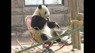 Song A Day #987: Panda Rocking Chair Song