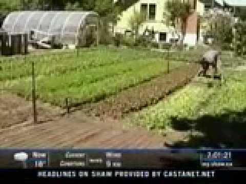 $50,000 From a Backyard Farm? The Enticing Promise of SPIN Farming