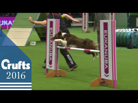 Agility - International Invitational - Large Final | Crufts 2016
