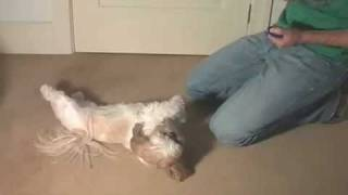 """play Dead"" Dog Trick"