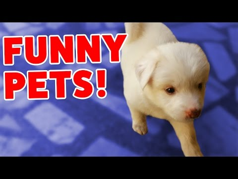 PUPPY DOG HIDES UNDER STUFFED ANIMALS & MORE Funny Video Compilation of 2016 | Funny Pet Videos