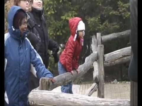 rotterdam zoo visit 2012