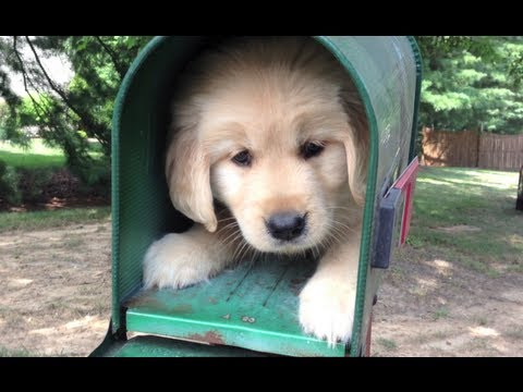 Cute Puppies Image Wallpaper I R Cute Puppy Youtube