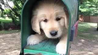 i r cute PUPPY