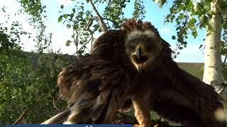 О солнечных орлах в Татарстане
