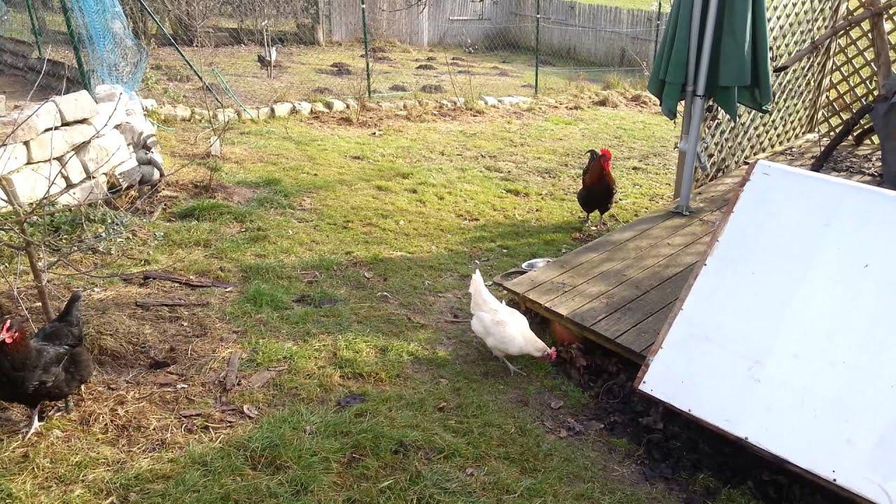 Hühnerhaltung Im Garten 19 01 2014 meine hühner im garten