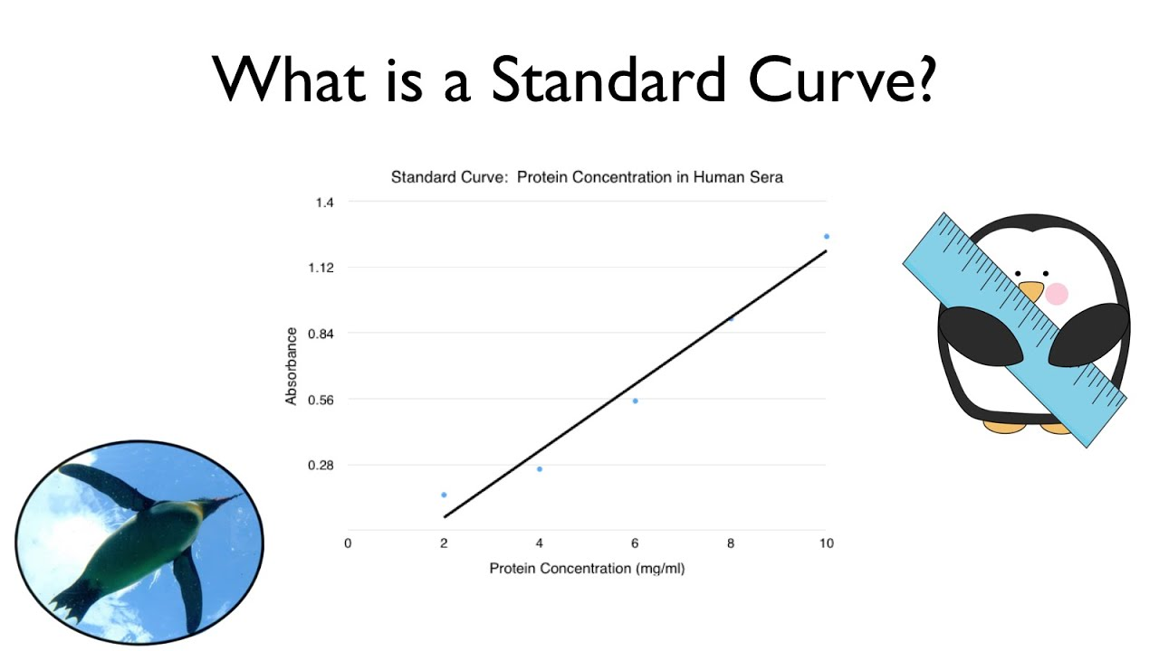 What Is A Standard Curve Youtube