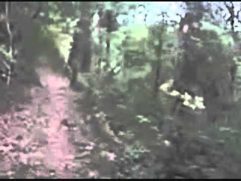 battle of evermore – Asheville Mandolin