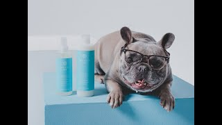 Beauty Insider - MONAT Pet™ Gentle Cleansing Dog Wash and Freshen Up Deodorizing Spray