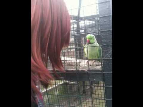 Emma's  war against the birdie....