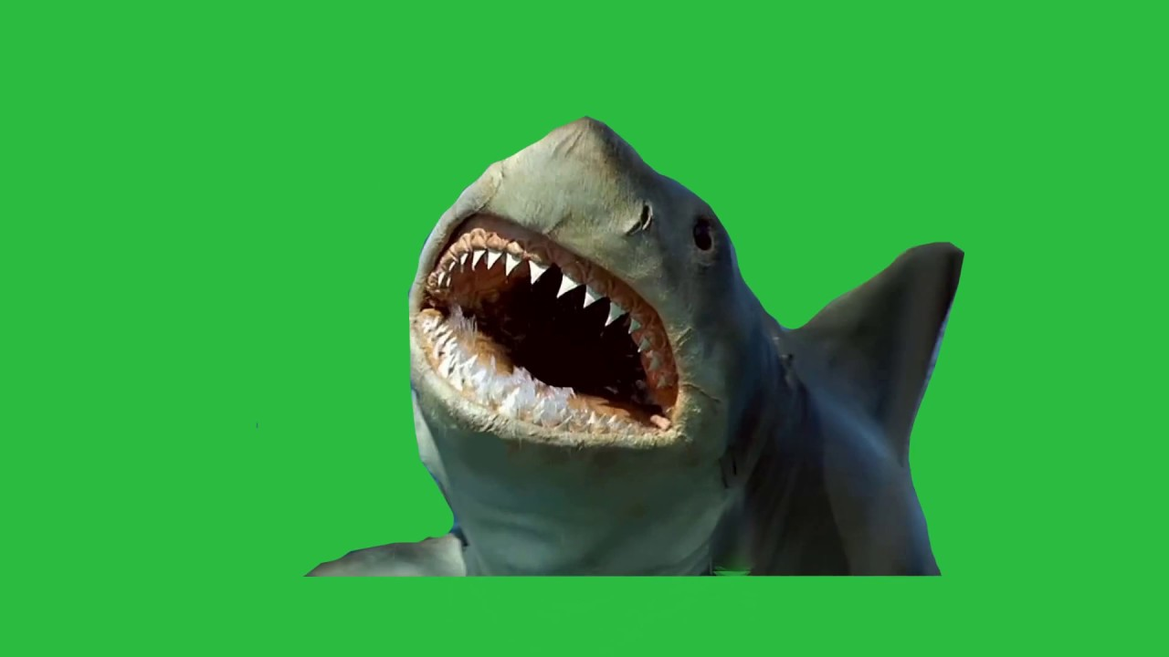 GREEN SCREEN GREAT WHITE SHARK Jumping above Water-animated