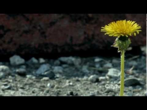Yazoo - Only You (Fringe / Walter Bishop)
