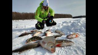 Ира там крупняк давай БАГОР Последний лед уже скоро Рыбалка 2021 крупный лещ плотва окунь р Обь