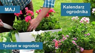 Maj w ogrodzie. Kalendarz ogrodnika na 03.05 - 09.05. Prace ogrodnicze w maju