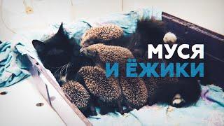 видео Кошка Медведева родила котят