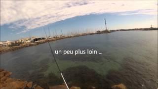 pêche de la seiche