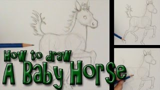 How to draw a Baby Horse