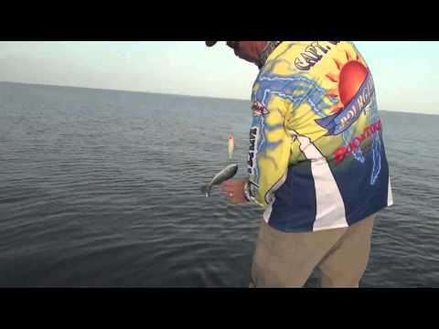 Barataria Bay speckled trout crushing topwater baits | Video