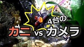 カニ vs 4台のカメラ!? カニの行動を追え! thumbnail