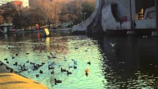 DOD F900Hd: Съемка озера в парке Глобы, Днепропетровск.MOV(, 2011-11-23T16:24:54.000Z)
