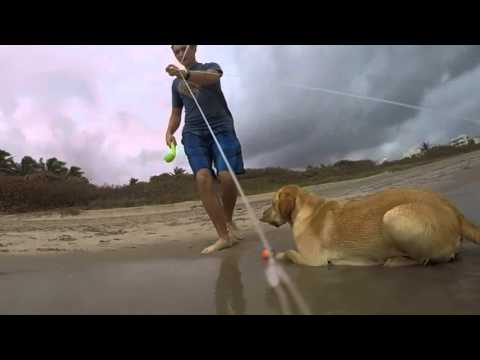 Centriphone[GoPro] experiment with Dogs