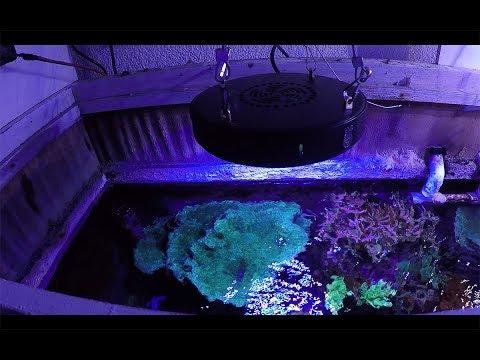 Nuevos módulos coral box en mi acuario marino||||||🐡  🐠