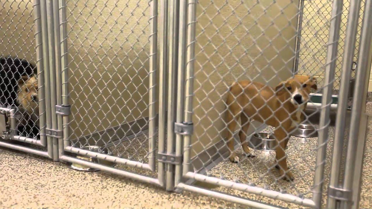 Veterinary Flooring Urine Resistant Floors Silikal Reactive Resin Floor