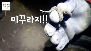 땅에서 미꾸라지 잡기가 가능할까?? 수박 키우기 위한작…
