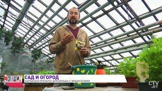 Иван Русских: Безопасное чудо-средство от вредителей! Спасаем сад и огород