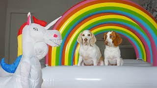 Dogs vs Unicorn Prank & Rainbow Surprise: Funny Dogs Maymo, Potpie, & Penny