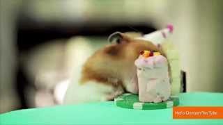 Tiny Hamsters Who Ate Burritos are Back for a Tiny Hedgehog