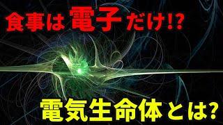 食事は電子だけ!?電気細菌の育成に成功!!!!