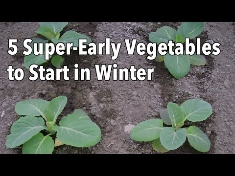 5 Super-Early Vegetables to Start in Winter