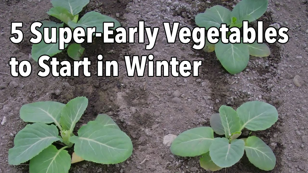 Inspiring  Superearly Vegetables To Start In Winter  Youtube With Foxy  Superearly Vegetables To Start In Winter With Amusing The Royal Botanic Gardens Melbourne Also Lymm Garden Centre In Addition Garden Design Online And Bird Garden As Well As Garden Vac And Blower Additionally Kensington Roof Gardens Address From Youtubecom With   Foxy  Superearly Vegetables To Start In Winter  Youtube With Amusing  Superearly Vegetables To Start In Winter And Inspiring The Royal Botanic Gardens Melbourne Also Lymm Garden Centre In Addition Garden Design Online From Youtubecom