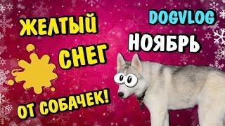 НОЯБРЬ - ЭТО ЖЕЛТЫЙ СНЕГ ОТ СОБАЧЕК :) Говорящая собака