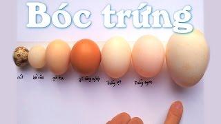 Bóc trứng gia cầm