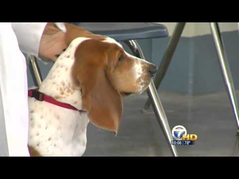 KATV: Paws In Prison