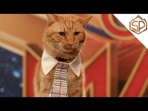Кот по кличке Гусь готовится к красной дорожке   Капитан Марвел