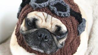 💗 ШАПКА для СОБАК 💗 Обзор шапок для собак 🐱 HAT for DOG 🐱 chapéus para cães modische Hüte für Hunde