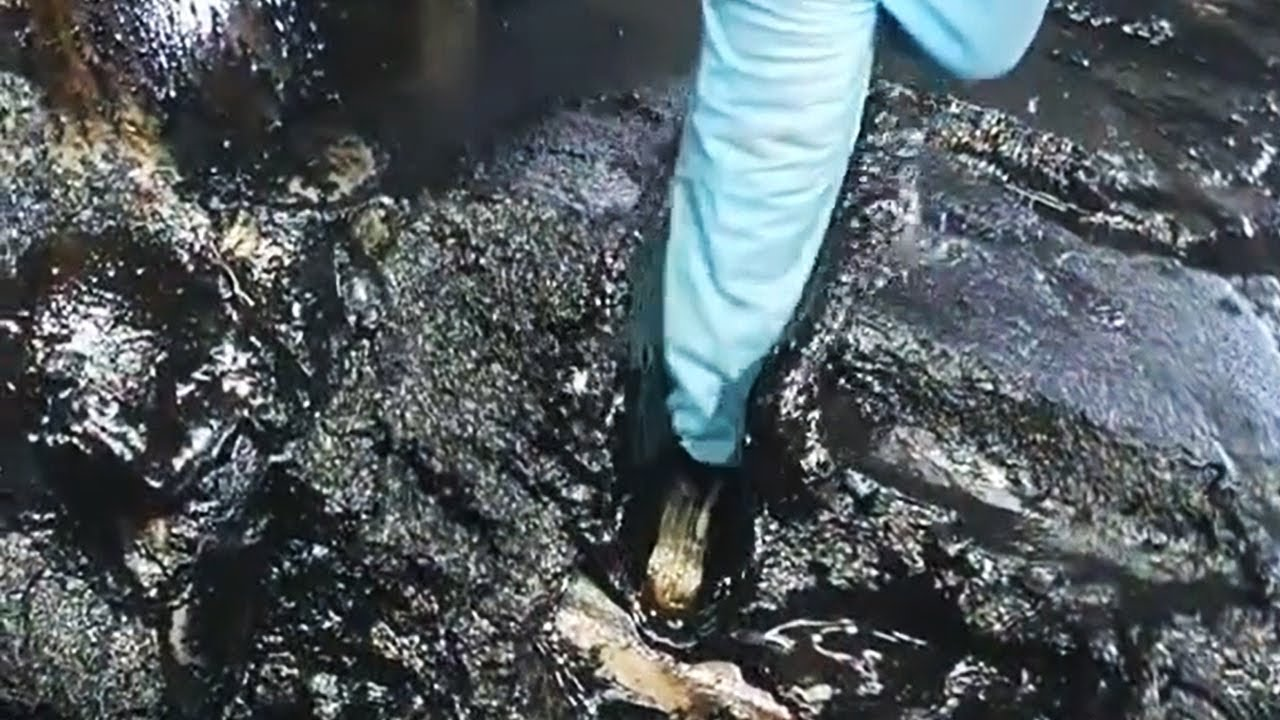 Download AdBlue in's Öl gekippt beim BMW F07 GT N57