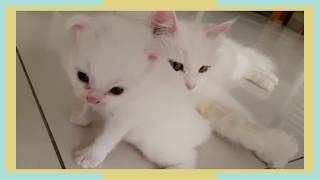Kittens Mom Takes Care Of Annoyed Kitten | Wonderpao