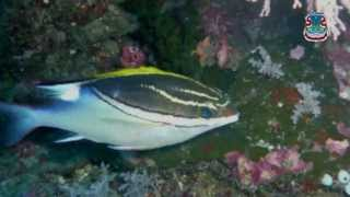 Download Video Taman Laut Bunaken MP3 3GP MP4