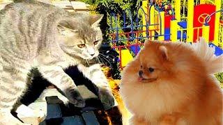 КОТ МАКС сбежал. Алиса ликует. Котенок против собак на детской площадке.